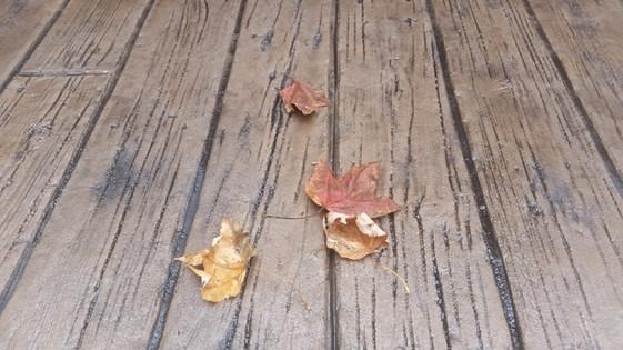 Woodplank Acorn with Dark Gray Release.j