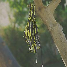 tiger tree.jpg