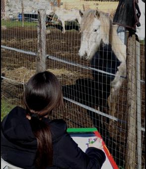 Horsewatching & Humanwatching