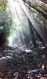 sentiero vulcano.jpg