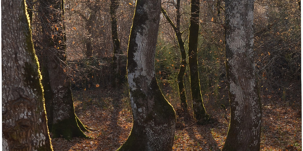 The Tree Tour