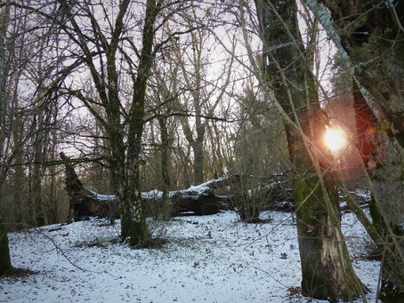 Nel bosco, a passo di volpe