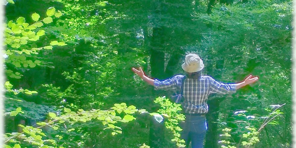 Deep Silence Nature: nella natura, senza parole