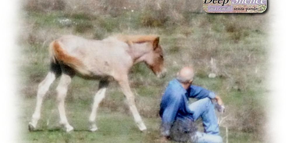 Deep Silence Horse
