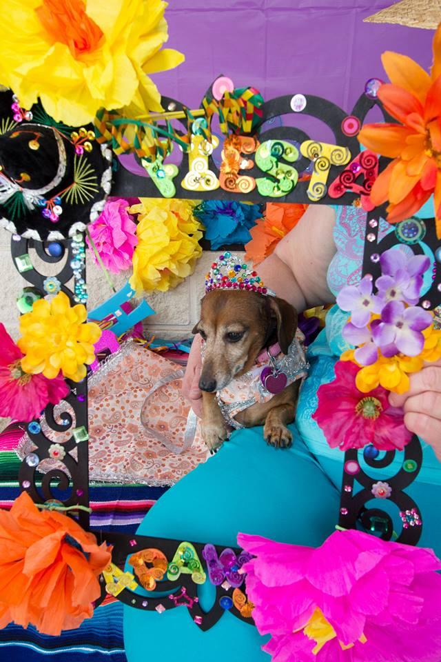 Fiesta 4 Paws 2014 Rosie.jpg