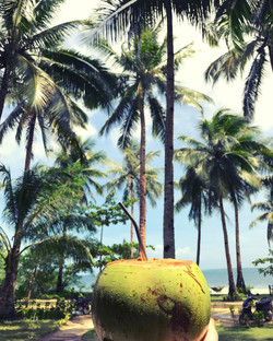 Cocnut trees of Siargao