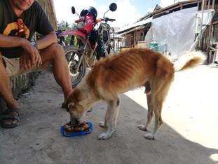 Koira-asioita