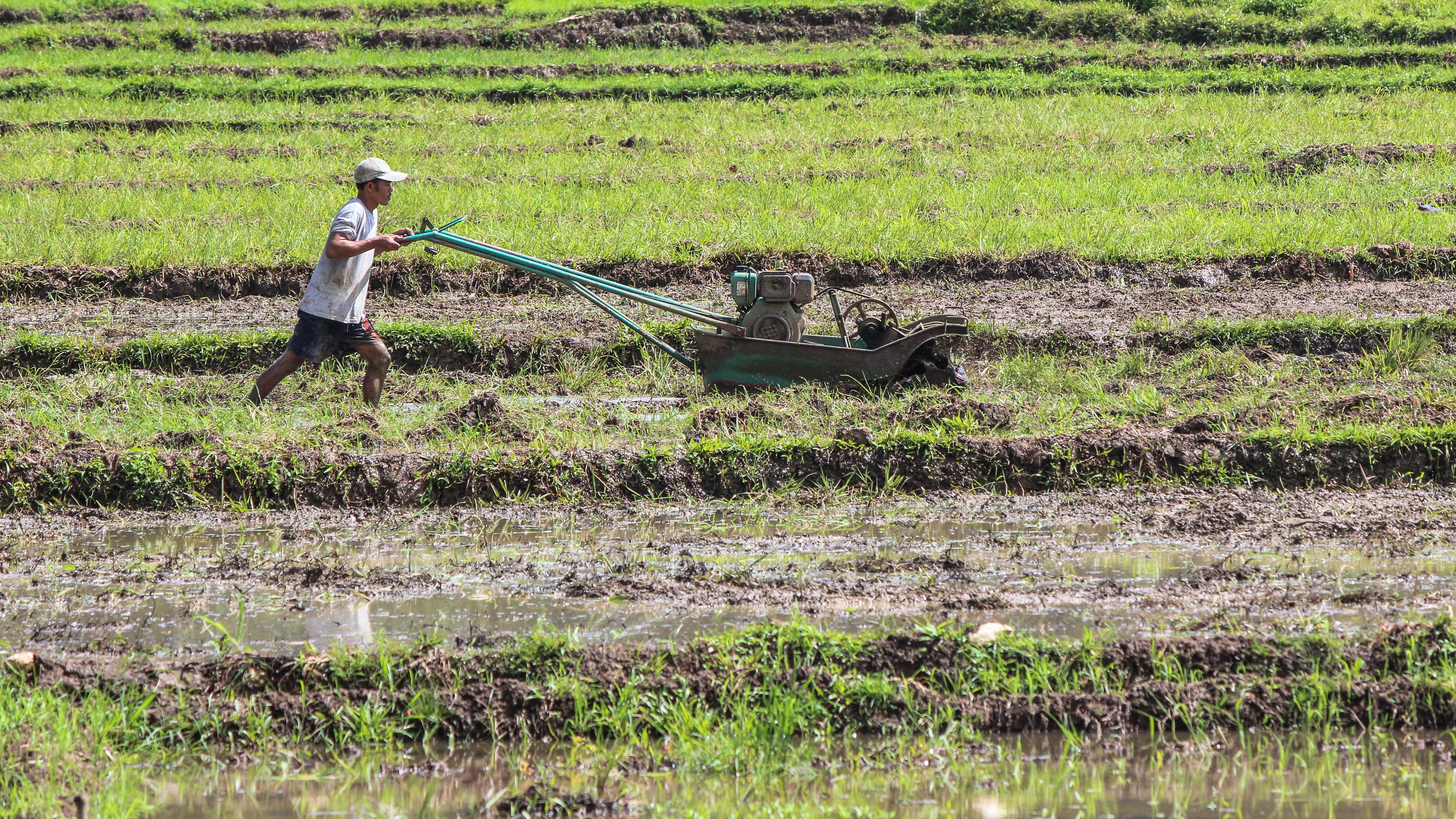 Maanviljelyä Siargaolla