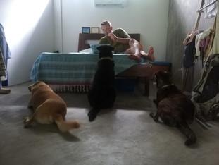 Odottelua ja vatvomista ( ja koiranpentuja)