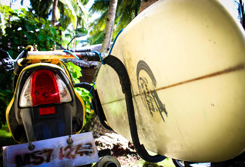 Surfing Carabao Surf Board