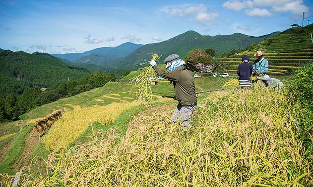 オーナーによる稲刈りの集い