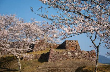 赤木城 桜の頃