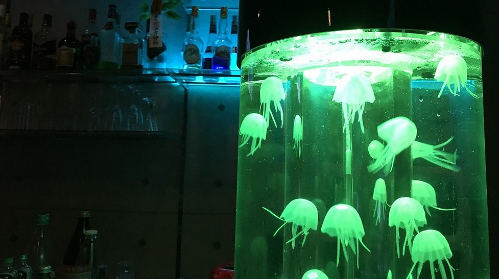 水槽を漂うクラゲ