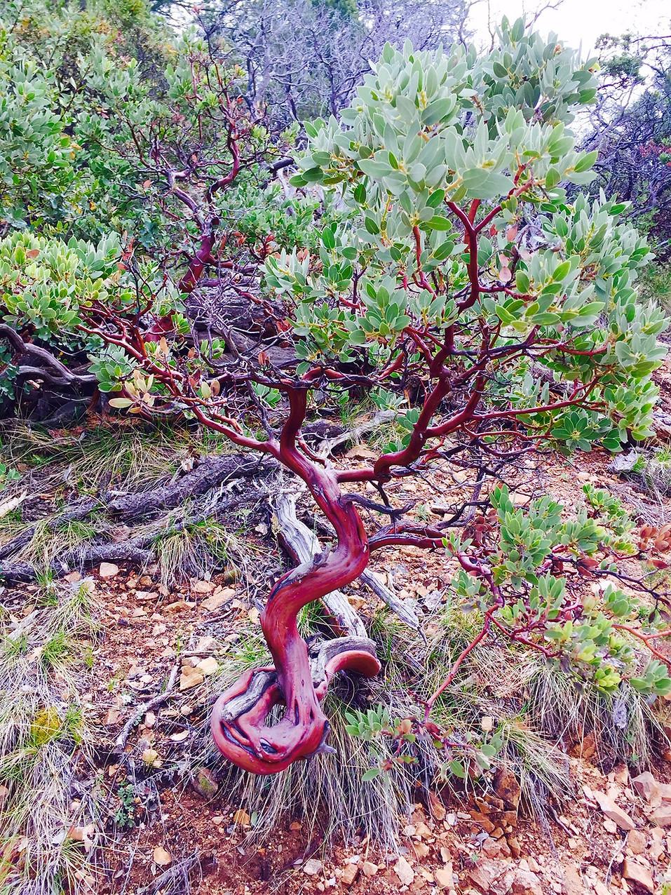 Red_Tree_IMG_1304.jpg