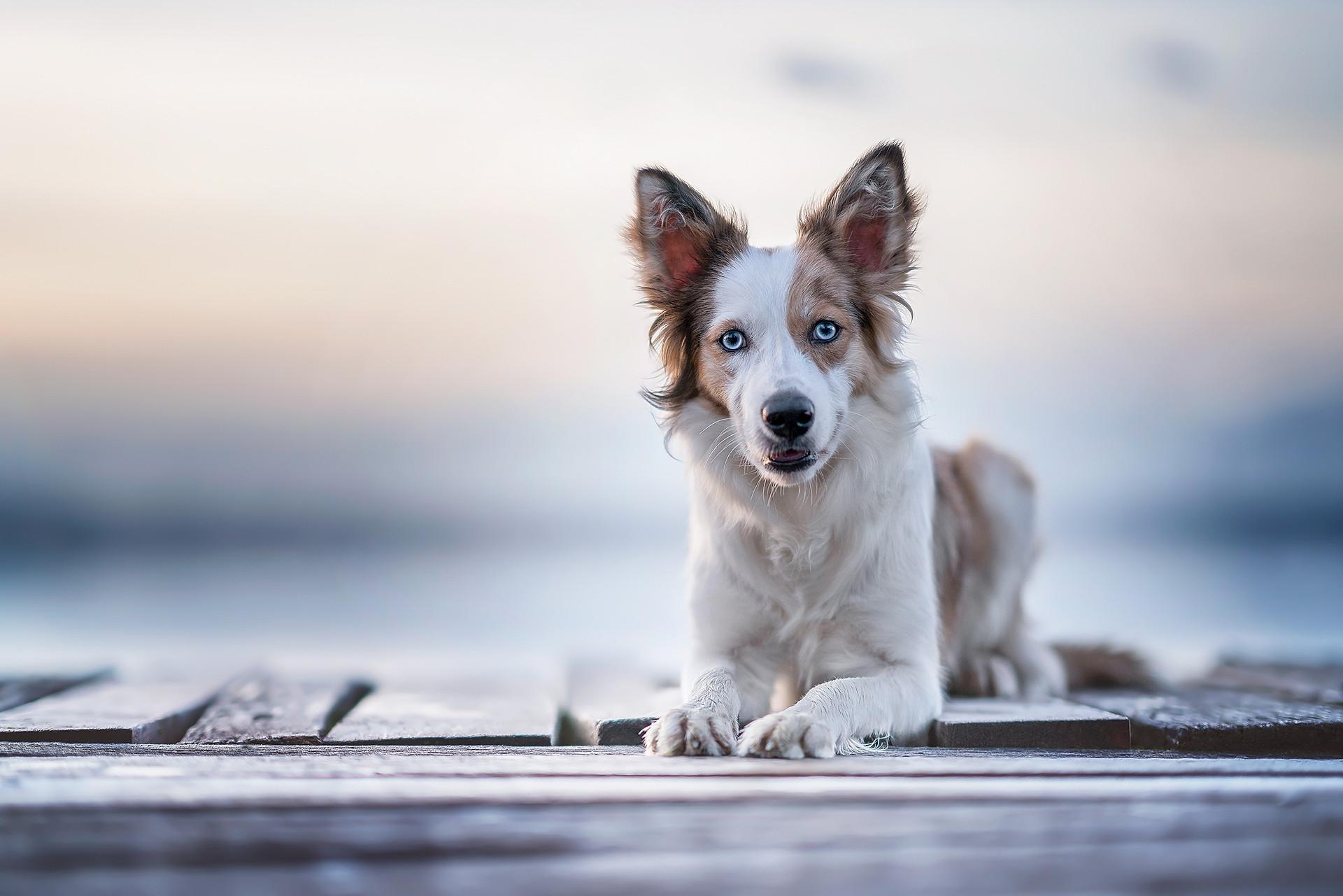 Hundefotografie.jpgLynnpix Photography I Hundefotografie in Graubünden, Zürich und der ganzen Schweiz