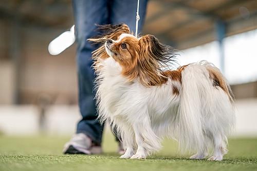 Lynnpix Photography I Hundefotografie in der ganzen Schweiz, Ausstellungsfotografie, Hundeausstellung, Dog Show Handling