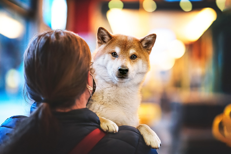 Lynnpix Photography I Hundefotografie in Graubünden, Zürich und der ganzen Schweiz