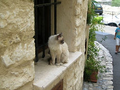 St. Paul 窓辺猫.jpg