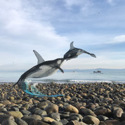 orca square.jpg