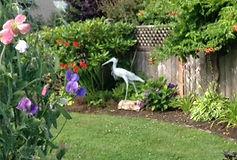 heron in garden.jpg