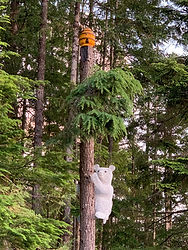 spirit bear looking for honey.jpg