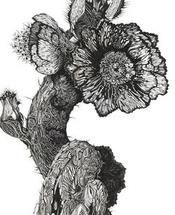 'Cactus'