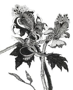 'Exotic Plant'