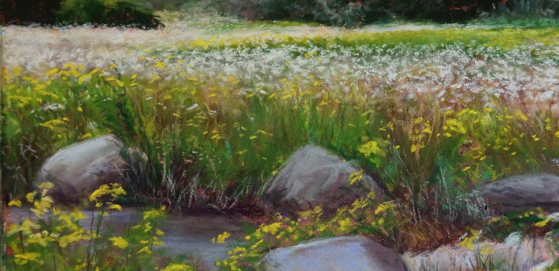 Midland Wildflowers