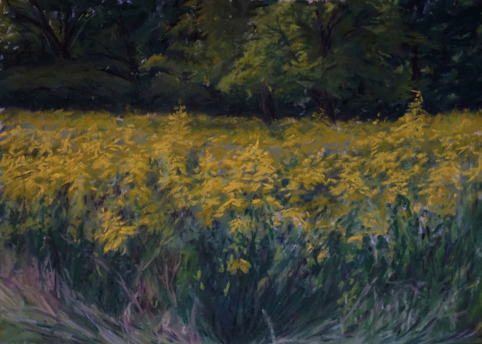 Fields of Goldenrod plein air