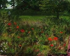 Lorraway, Cathy, Summer field of poppies