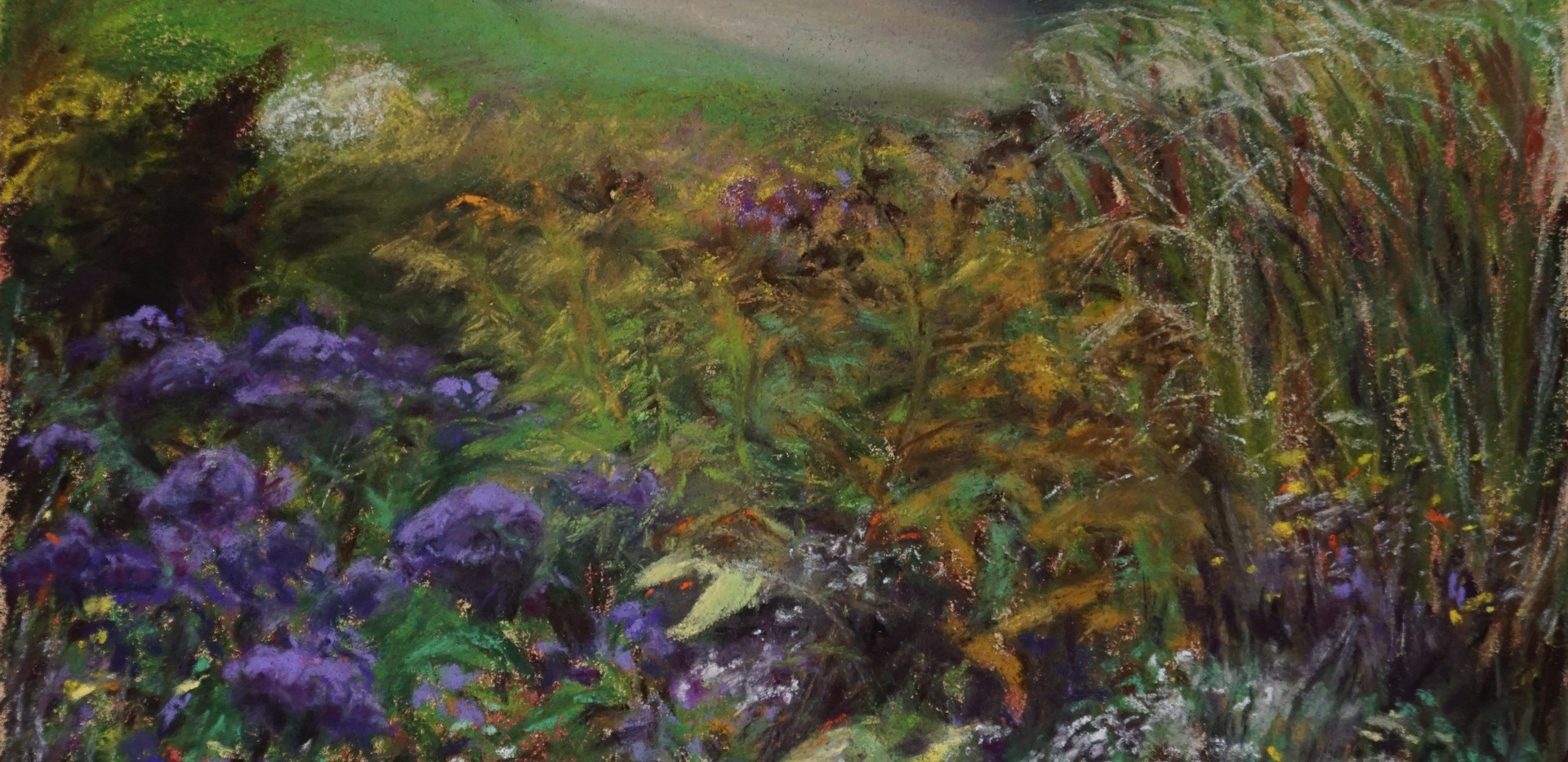 Bruce Trail Wildflowers.jpg