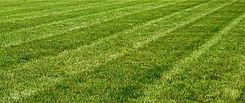 Lawn-2_edited.jpg