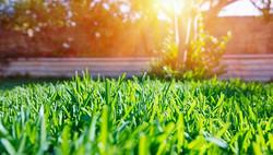grass-wtih-glow_edited.jpg