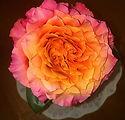 Moms Flower.jpg