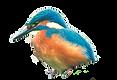 vogel1_bearbeitet.png