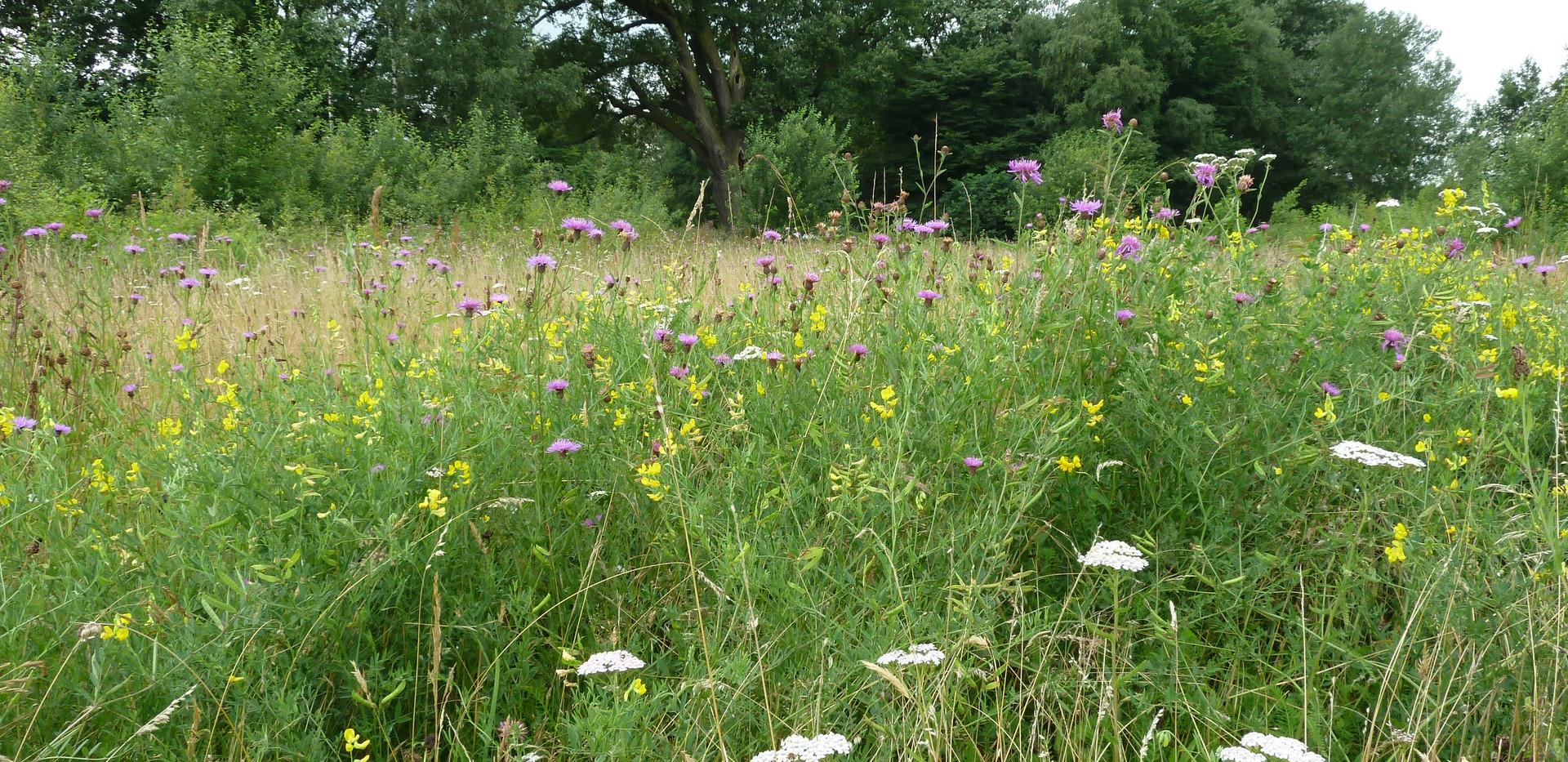 Mengsel 2 - Kruidenrijke gemengde grasstrook