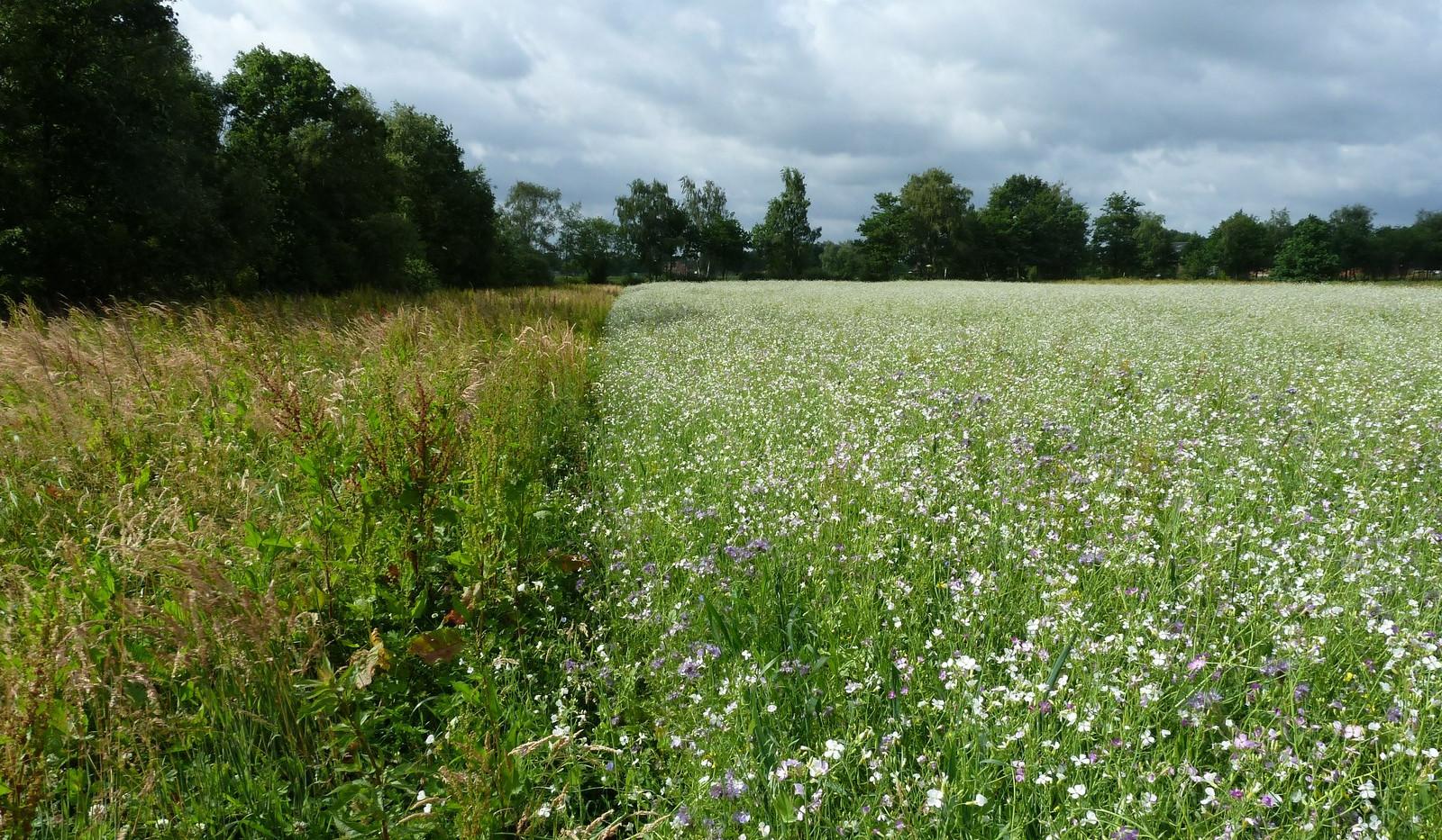 biodiversiteitsakker WBE Neerpelt
