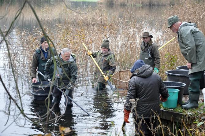 Duizenden kleine visjes gered uit vijver