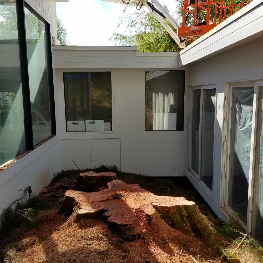 Technical Ironwood Tree Removal
