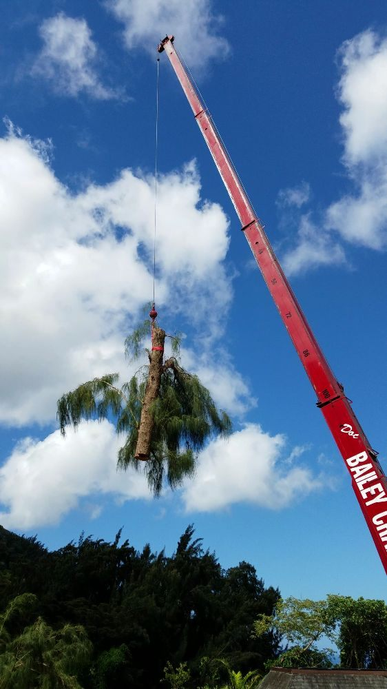Crane Ironwood Tree Removal