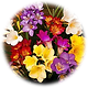 Freesia Flowers.jpg.png