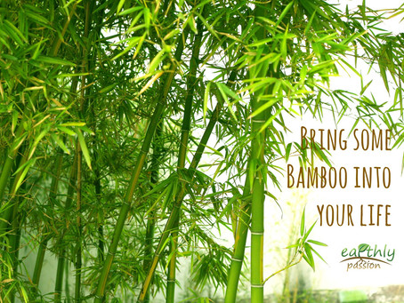 WHY EARTHLY PASSION LOVES BAMBOO