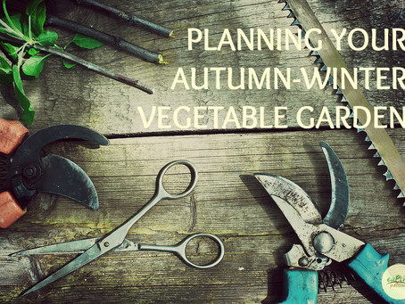 PLANNING YOUR AUTUMN-WINTER VEGETABLE GARDEN