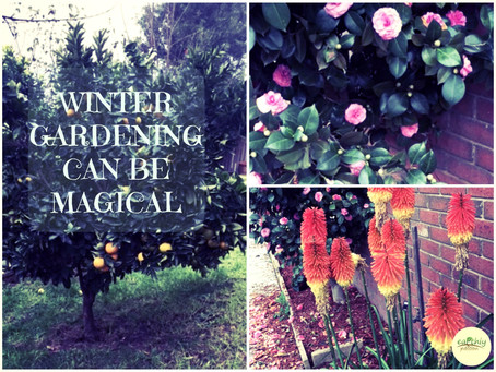 WINTER GARDENING CAN BE MAGICAL