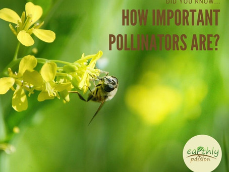 DO YOU KNOW HOW IMPORTANT POLLINATORS ARE?