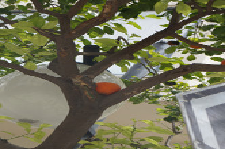 Nicosia ja appelsiini.