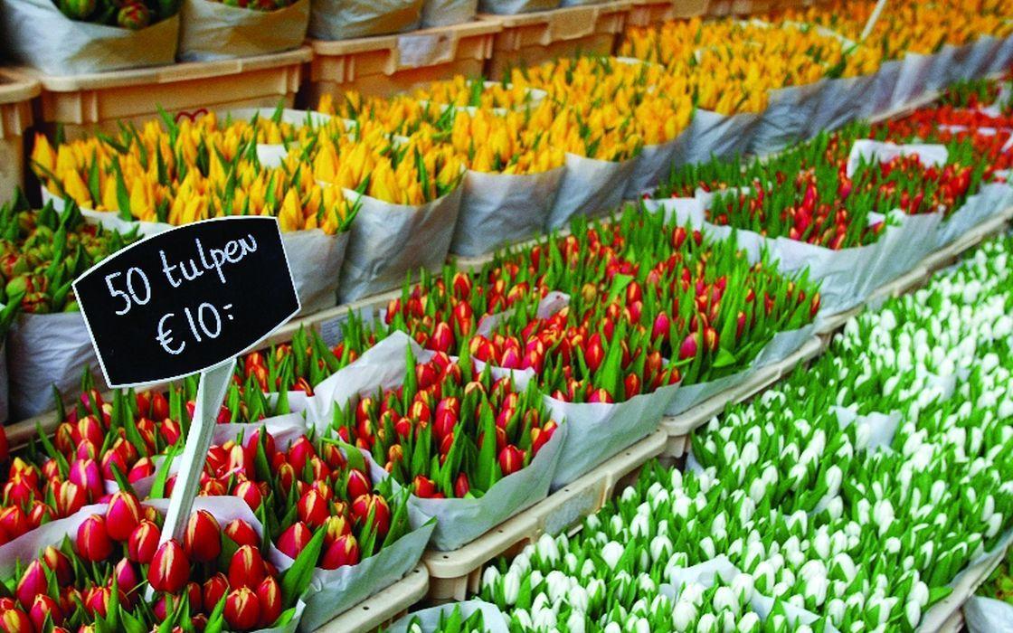 54990_fullimage_bloemenmarkt, amsterdam tulips