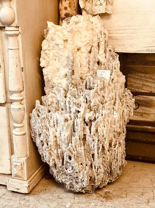 Large Coral Slab