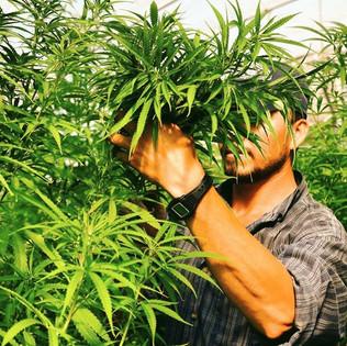 Organic Greenhouse Production