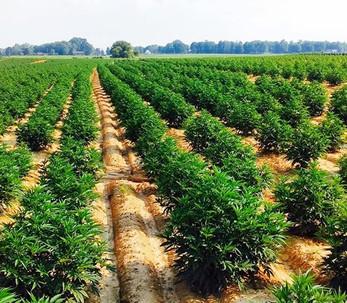Sustainable Large Scale Production